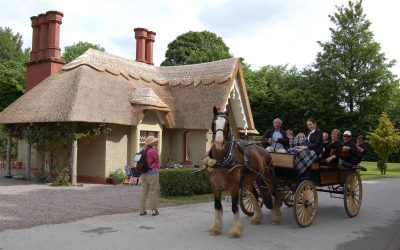 Killarney Jaunting Car Tour with Craft Beer & Pizza