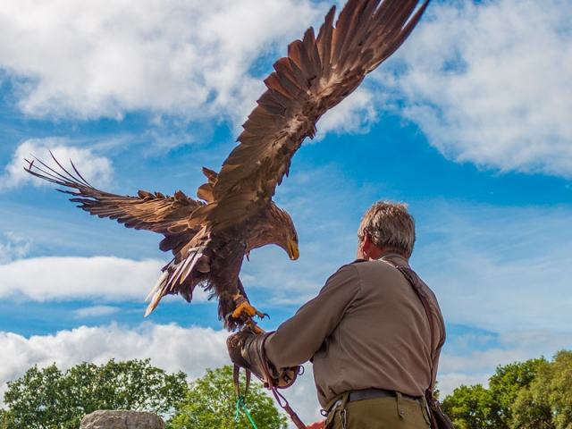 Birds of prey demonstrations